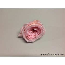 GECONSERVEERDE ROOS (ENGLISH ROSE KATE) +/-5CM ROOS 1ST