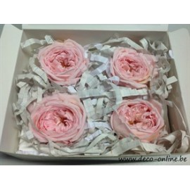 GECONSERVEERDE ROOS (ENGLISH ROSE KATE) +/-5CM ROOS 4ST
