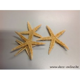 ZEESTERREN (SUGAR STARFISH) 8-10CM 10ST