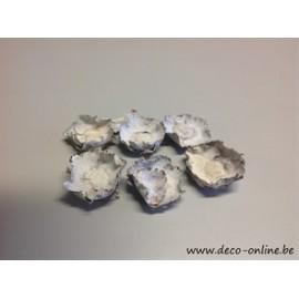 COCO FLOWER WHITE WASH +/-250GR
