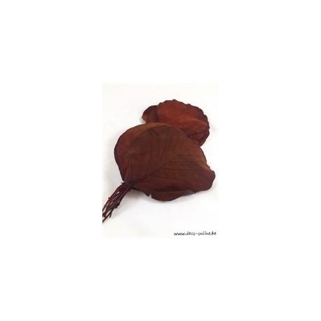 COBRA BLAD GECONSERVEERD (GESTABILISEERD) GECONSERVEERD (GESTABILISEERD) BRUIN 50ST