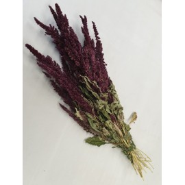AMARANTHUS BORDEAUX NATUREL