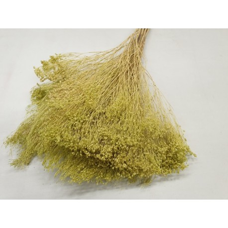 BROOM BLOOM VERT CLAIR +/-100GR