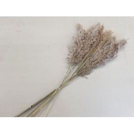 PAMPAS NATUREL +/-70CM 6PCS