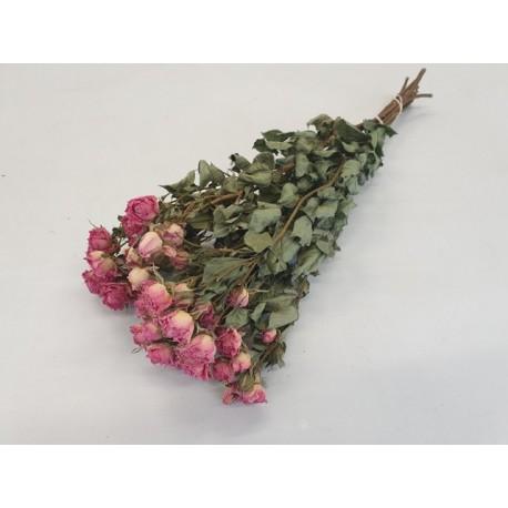 ROSES SPRAY ROSE NATUREL