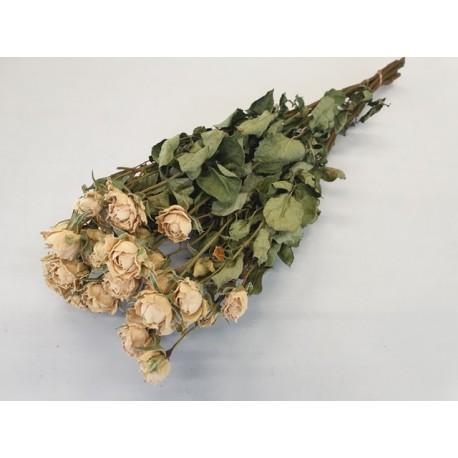 ROSES SPRAY BLANC NATUREL