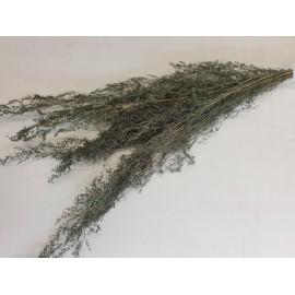 BRIZONNE ICE GREEN