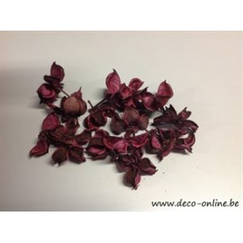 COTTON PODS AUBERGINE +/-50GR