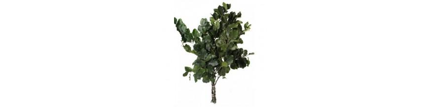 Geconserveerd blad (gestabiliseerd)